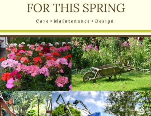 Landscaping Tips for This Spring